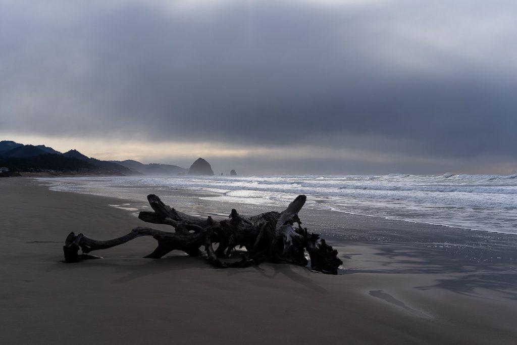 Quel che resto di un tronco lavorato con pazienza dall'acqua del mare