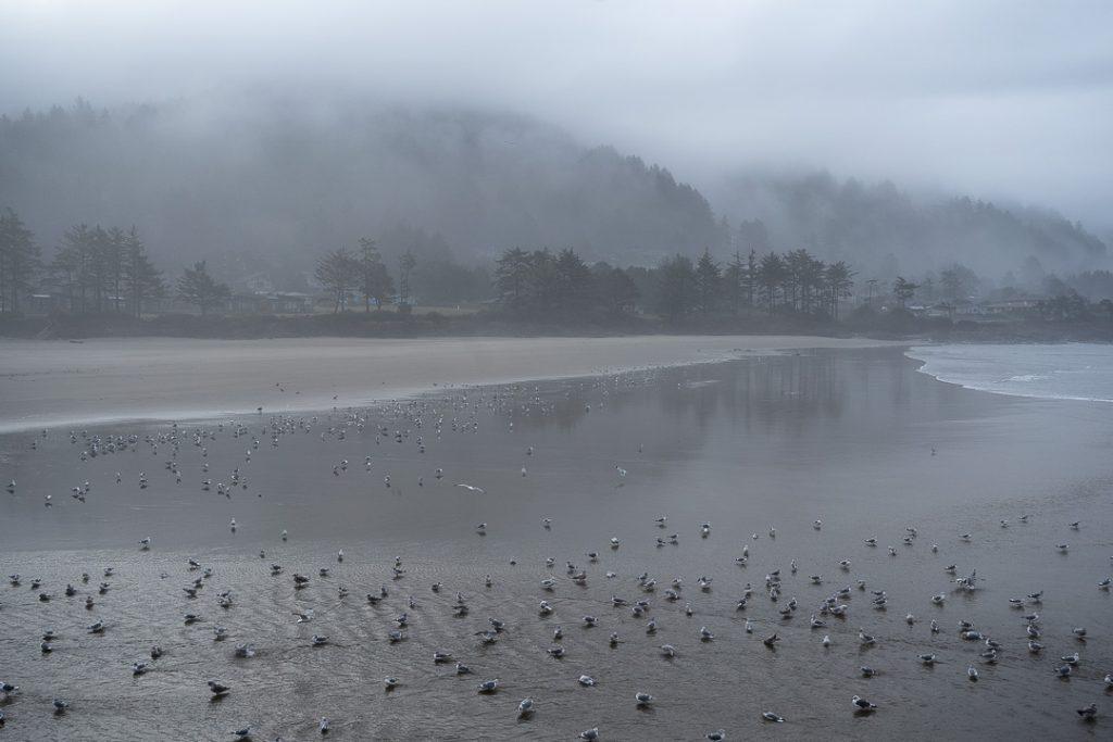 Non ho mai visto spiagge così enormi e l'Oregon ne è pieno